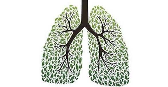 erbe polmoni sistema respiratorio