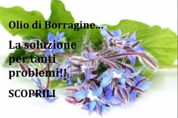 Borragine