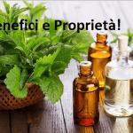 Menta: La Pianta della salute! Capace di curare Cefalee, Antibatterico, Analgesico MA NON SOLO!