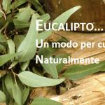 EUCALIPTO: la pianta Medica che aiuta la Salute. Il modo naturale per stare bene! LEGGI