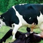 Più si beve latte vaccino e più calcio si perde dalle ossa: parola del British Medical Journal