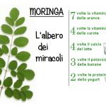 La Moringa. L'albero dei miracoli che pochi conoscono: Troppo scomodo per qualcuno… SCOPRILO