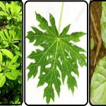 Ecco le tre piante che combattono attivamente il DIABETE ma non solo…Scoprile