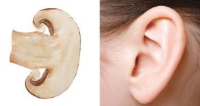 Funghi e orecchie