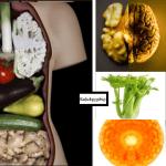 La teoria della Signatura. Cibi simili agli organi sono il miglior aiuto per il loro benessere. COME E PERCHE'