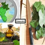 Per un bucato ecologico…La soluzione la trovi mettendo l'edera in lavatrice!Ecco perché