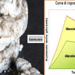 Gallette di Riso…Altro che dietetiche! Alzano l'indice glicemico e contengono arsenico! LEGGI
