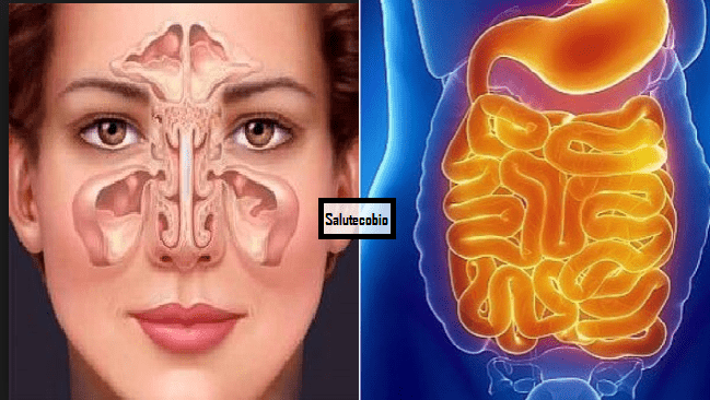 Muco intestinale: i cibi che ne riducono la produzione