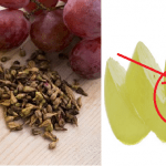 I benefici sconosciuti ma indiscussi degli Acini d'uva! Una risorsa contro il cancro, stitichezza ma non solo