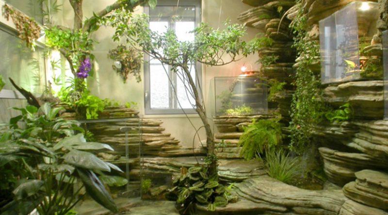 Le piante che in casa purificano l aria e migliorano la vita - Piante da casa che purificano l aria ...