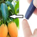 Con 20 foglie di questa comune pianta potrai combattere il Diabete in modo naturale! SCOPRI COME