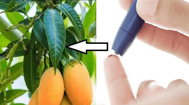 Molto Combatti il diabete con le foglie di questa pianta! Scopri come ZX86