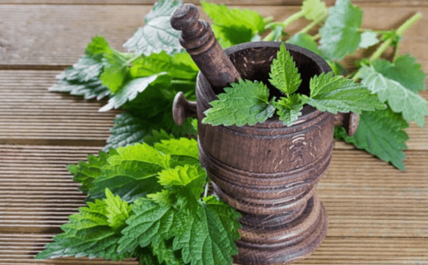 ortica, pianta curativa