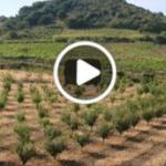 Permacultura :come coltivare senza fertilizzanti ne diserbanti