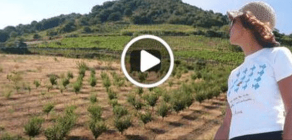 permacultura e orti sinergici